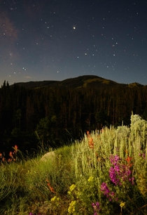 Moonlit night deep in the Wyoming backcountry