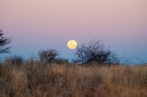 Moonrise over Etosha in Namibia just before the complete lunar eclipse in July