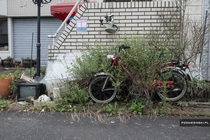 Moped being overrun by weeds parked on the street in Namie in the Fukushima Exclusion Zone