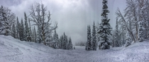 Moran Woods Jackson Hole Ski Resort WY