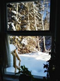More snow last night Now sun shining Looking out kitchen window