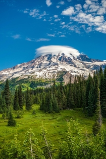 Morning at Paradise Mount Rainier National Park Washington USA