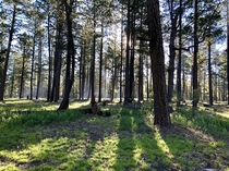 Morning at the Mogollon Rim Northern AZ