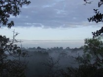 Morning Fog in the Canopy of the Ecuadorian Amazon