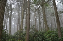 Morning Fog On The Appalachian Trail USA PANJ