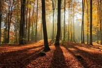 Morning forest light in North Poland  by Mateusz Liberra