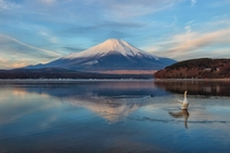 Morning Fuji at Swan Lake in Yamanakako-mura Yamanashi Prefecture Japan by Shinichiro Saka