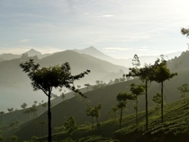 Morning hike in Tea Plantations Munnar India
