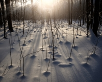 morning in winter woodland near my hometown TatarstanRussia