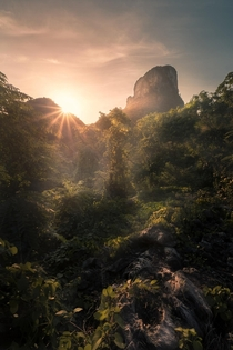 Morning Mist in the Jungles of Thailand in Lopburi