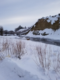 Morning walk with my dog Ruthie Wyoming