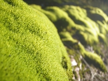 Moss covered rocks x