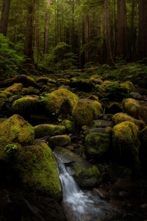 Moss Ferns and Big Ol Trees - Olympic National Park WA -