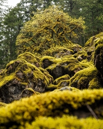 Moss Moss Everywhere Olympic National Forest Washington  ignatureprofessor