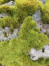 Moss on a rock in Harriman state park NY