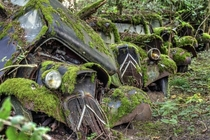 Moss-ridden cars in a junkyard by Christian Bruneau