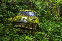 Mossy car Photo by Antoine Jacquiaux