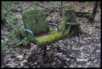 Mossy chair Brown Woods Bangor Maine