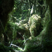 Mossy Forest in the Cameron Highlands Malaysia
