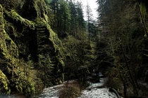 Mossy Gorge in north Oregon