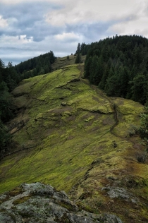 Mossy mountain side in the east side of the Cascades in Oregon