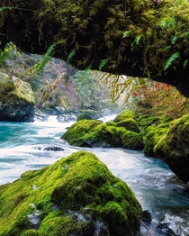 Mossy rocks and bluish waters at Olympic National Park WA USA  ignatureprofessor