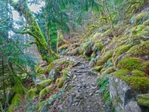 Mossy Trail near Bridal Veil Falls Washington