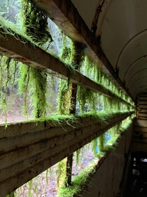 Mossy window in an abandoned trailer Armstrong Woods California