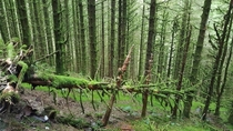 Mossy woods in Harlech WALES x