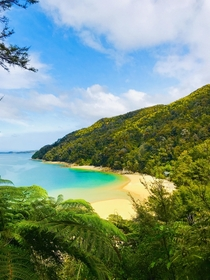 Most Vibrant Beach Ive Ever Seen Stilwell Bay Abel Tasman National Park New Zealand Te Wai Pounamu