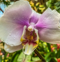Moth Orchid  The vast diversity and beauty of Flowers is astounding