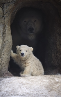 Mother and baby polar bear Photo by Sergei Gladyshev