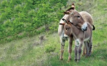 Mother donkey and her foal