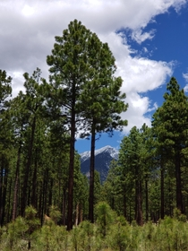 Mount Humphreys Flagstaff AZ OC
