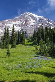 Mount Rainier National Park in summer