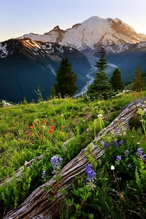 Mount Rainier Photo by Chung Hu