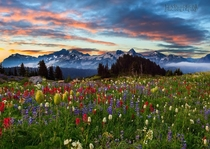 Mount Rainier Washington Photo by Kevin McNeal