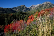 Mount Timpanogos in Utahs Wasatch Range landscape in the USA