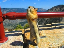 Mountain Chipmunk Enjoying a Snack