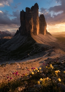 Mountain Flowers and Breathtaking Sunsets Tre Cime di Lavaredo Italy