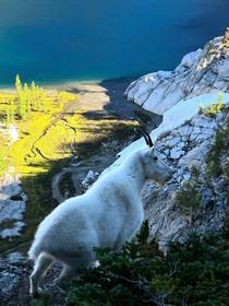 Mountain Goat Enchantments Wa