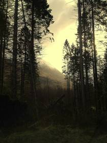 Mountain through the trees Glencoe region Scotland
