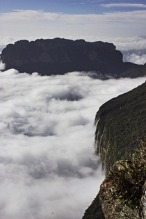 Mounte Roraima and Roraimia or Uei huge clouds from the South American jungles collide with these giantesque rocks called tepuys distributed between Venezuela and Brazil and become the largest waterfalls in the world and then gigantic rivers heritage of t