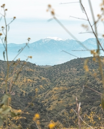 Mt Baldy in Southern California as seen from Chino Hills State Park