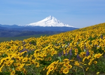 Mt Hood from Sevenmile Hill Oregon  x