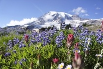 Mt Rainier From Paradise - My favorite alpine garden  OC ISO  -mm f