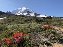 Mt Rainier - from the northwest Spray Park Trail July