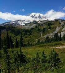 Mt Rainier National Park WA