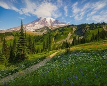 Mt Rainier Washington x