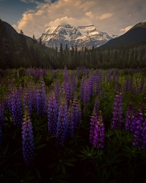 Mt Robson British Columbia Canada